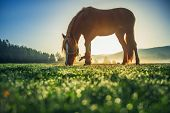 Horses Grazing On Pasture At Misty Sunrise poster