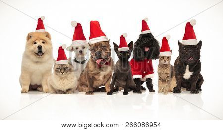 poster of group of eight adorable santa cats and dogs with costumes sitting and standing on white background
