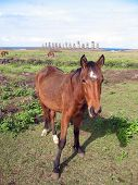 Wild horses against 15 moais of Ahu Tongariki, Easter Island