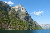 The Breathtaking Norwegian Aurlandsfjord And Naeroyfjord - Unesco Protected Fjord - Cruise (flam- Gu poster