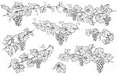 Monochrome Grapes Branches Set. Hand Drawn Grape Bunches And Leaves Isolated On White Background. Ve poster