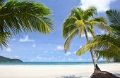 Palm in the beach, far sea water, sky background and tropical nature