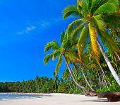 Palms trees on the beach