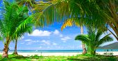 Blue sea water under palm tree frame and sky background - summer nature