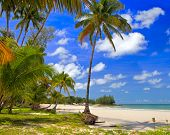 Palms trees forest near water on the beach with tropical nature, summer holiday, travel background