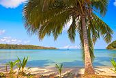 Once palm tree over sea water with blue sky and remote island background