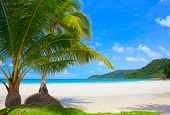 Couple palm tree with sea water, remote island and blue sky background