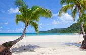 Beautiful green palm trees at tropical beach