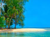 Island in the sea with tropical plants