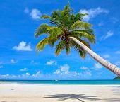 Dream scene. Beautiful palm tree over white sand beach. Summer nature view.