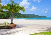 Palm tree on white sand beach and island in the sea under blue sky. Luxury vacations.
