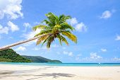 Tropical luxury beach with palm trees. Summer exotic nature.