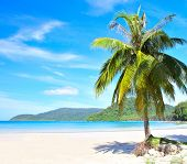 Nice palm tree on white sand beach under blue sky with clouds. Tropical nature view.