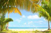 Palm trees gateway to beautiful beach