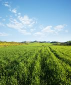 land covered by green grass