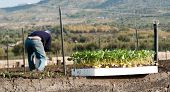 group of young plants, on background blurred farmer to work