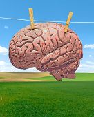 stock photo of brainwashing  - Washed bloody brain drying on field background - JPG