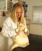 Beautiful blond young  Veterinarian examining a cat