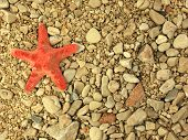 Starfish on grit
