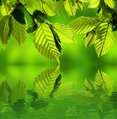 Leaves above water surface