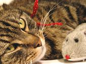 foto of tabby cat  - portrait of tabby - JPG