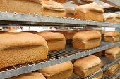 Freshly baked bread on shelfs