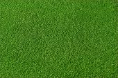 Very smooth green grass
