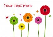 Colour flowers of gerbera isolated in white. Vector illustration