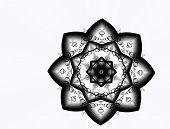 Black Star Flower