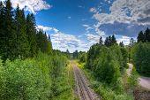 Old Railroad Leading Thru Dense Forest