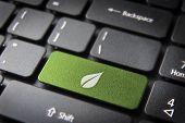Green Leaf Keyboard Key, Environment Background
