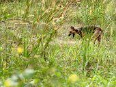Yawning Dog In Grassland