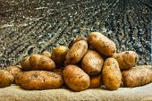 stock photo of exhumed  - Raw potatoes amid the countryside and fields - JPG