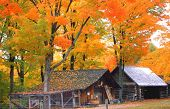 stock photo of maple tree  - taken near huntsville ontario was published on a calender - JPG