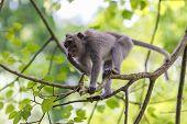 Monkey On Tree Branch In Ubud Forest, Bali
