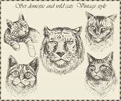 Set domestic and wild cats. Vintage style poster