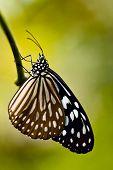 Butterfly At Nongnuch Garden