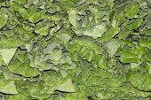 Detail of collard greens produce