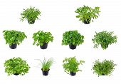stock photo of potted plants  - different kinds of isolated herbs - JPG