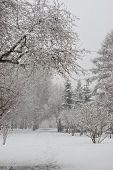 Snowfall In Park