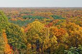 Fall Panorama In A Midwest Forest