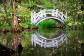 foto of swamps  - Reflection of one of the beautiful bridges located in the cypress swamp garden of Magnolia Plantation in Charleston - JPG