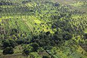 Rural Tonga