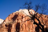 Leafless Tree Silhouette Contrast Against Red Rock Desert Mesa Zion