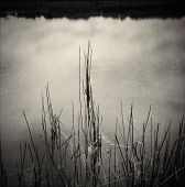 image of boggy  - Reflections and plants in pond - JPG