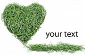 green heart of fir needles Valentines Day