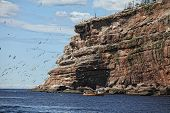 The cliffs of Bonaventure Island in the Gaspe, Quebec, is the home of the largest northern gannet po