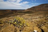 Vulcanic Timanfaya   Spain Plant Flower Bush