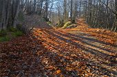 Dead Leaves Path