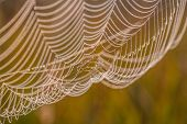 The spider web (cobweb)